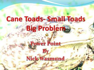 Cane Toads- Small Toads Big Problem