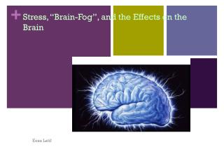 "Stress, ""Brain-Fog"", and the Effects on the Brain"