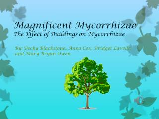 Magnificent  Mycorrhizae The Effect of Buildings on  Mycorrhizae