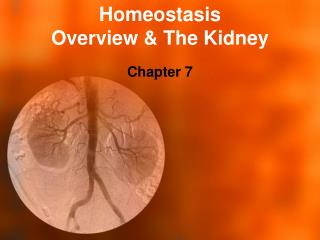 Homeostasis Overview & The Kidney