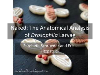 Naked: The Anatomical Analysis of  Drosophila  Larvae