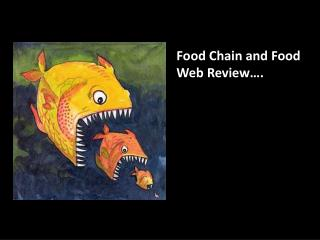 Food Chain and Food Web Review….