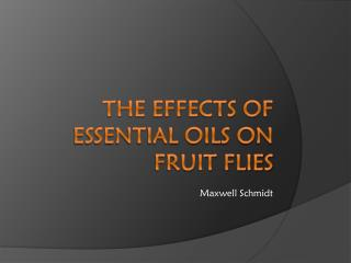 The Effects of Essential Oils on Fruit Flies