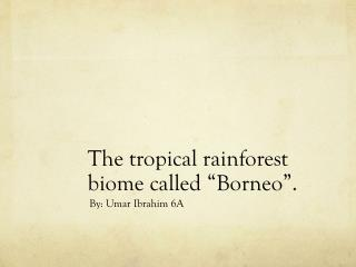 "The tropical rainforest  biome called ""Borneo""."