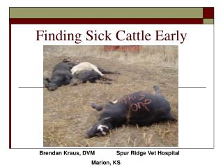 Finding Sick Cattle Early