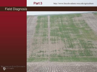 Field Diagnosis