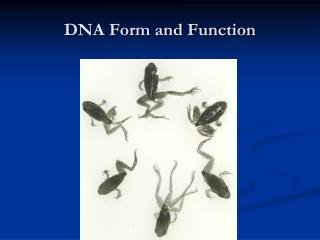 DNA Form and Function