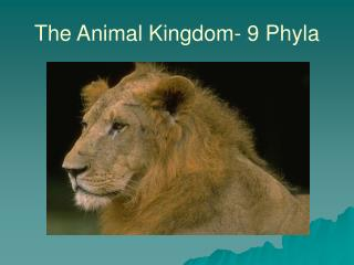 The Animal Kingdom- 9 Phyla