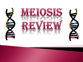 Meiosis Review