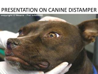 PRESENTATION ON CANINE DISTAMPER