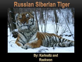 Russian Siberian Tiger