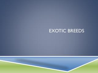 Exotic Breeds