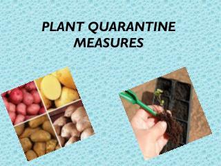 PLANT QUARANTINE MEASURES