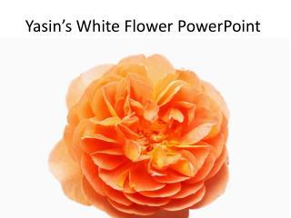 Yasin's  White Flower PowerPoint