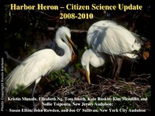 Harbor Heron – Citizen Science Update 2008-2010