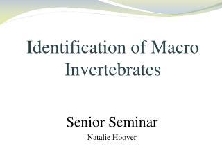 Identification of Macro Invertebrates
