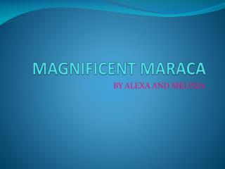 MAGNIFICENT MARACA