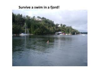 Survive a swim in a fjord!