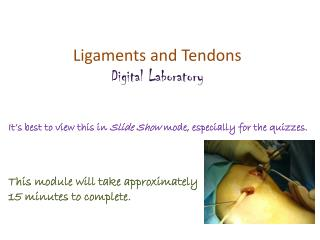 Ligaments and Tendons Digital Laboratory