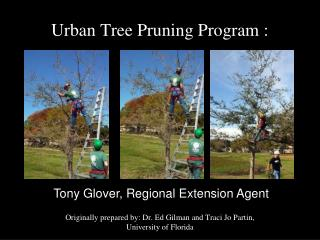 Urban Tree Pruning Program :