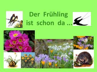 Der   Frühling ist schon da  ...