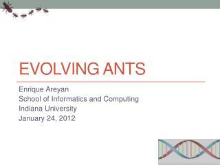Evolving Ants