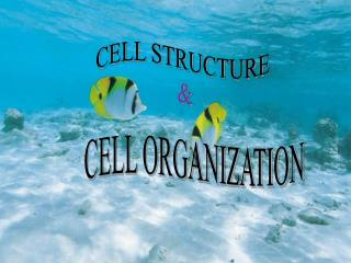 CELL STRUCTURE  &