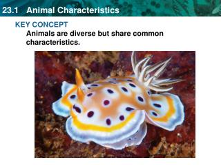 KEY CONCEPT Animals are diverse but share common characteristics.