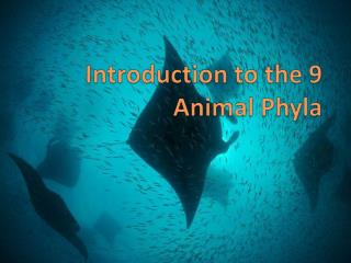 Introduction to the 9 Animal Phyla