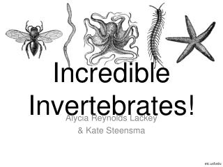 Incredible Invertebrates!