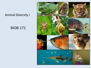 Animal Diversity I