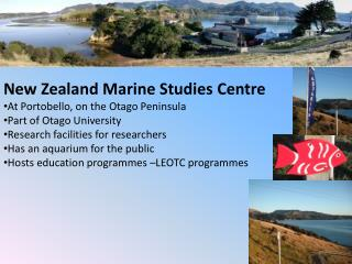 New Zealand Marine Studies Centre At Portobello, on the Otago Peninsula Part of Otago University