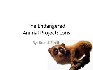 The Endangered  Animal Project: Loris