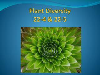Plant Diversity  22-4 & 22-5