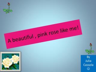 A beautiful , pink rose like me!