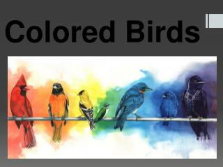Colored Birds