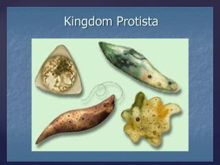 What are protists?