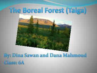 The Boreal Forest (Taiga)