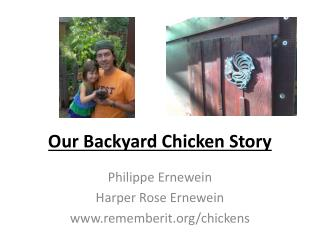 Our  Backyard Chicken Story