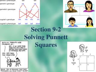 Section 9-2 Solving  Punnett  Squares
