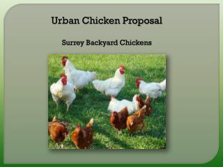 Urban Chicken Proposal Surrey Backyard Chickens