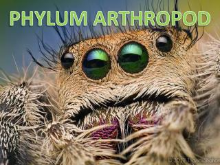 PHYLUM ARTHROPOD