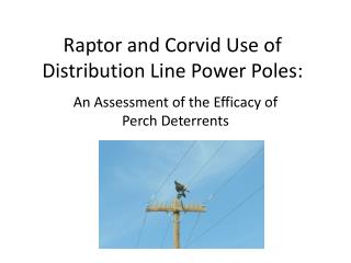 Raptor and Corvid Use of  Distribution Line Power  Poles: