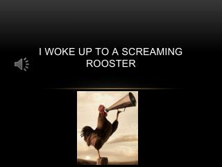 I woke up to a screaming rooster
