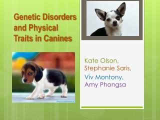 Genetic Disorders and Physical Traits in Canines