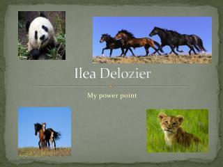 Ilea Delozier