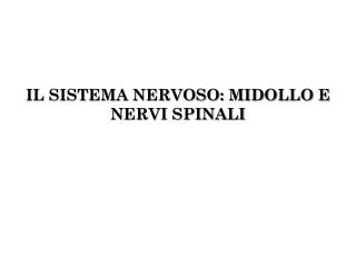 IL SISTEMA NERVOSO: MIDOLLO E NERVI SPINALI