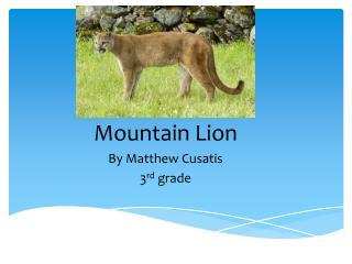 Mountain Lion By Matthew  Cusatis 3 rd  grade
