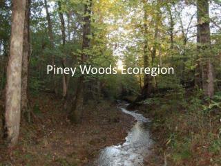 Piney Woods Ecoregion