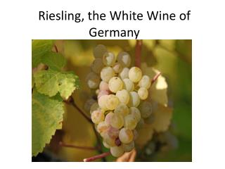 Riesling, the White  W ine of Germany